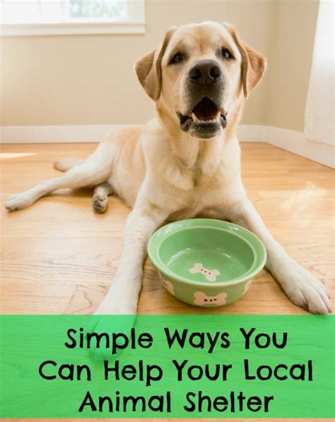 local pound simple ways you can help your local animal shelter