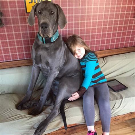 best dogs to own in honor of all dogs everywhere s are the best pet you will own 22 pics