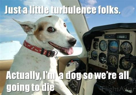Internet Dog Meme - the 50 funniest dog memes of all time worldwideinterweb