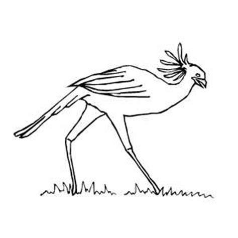 secretary bird coloring page secretary bird coloring page