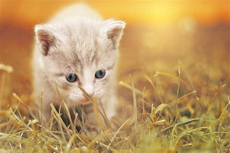 what is the average lifespan of a cat