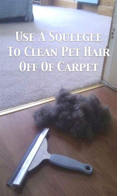 how to get dog hair off the couch 55 must read cleaning tips and tricks with pictures