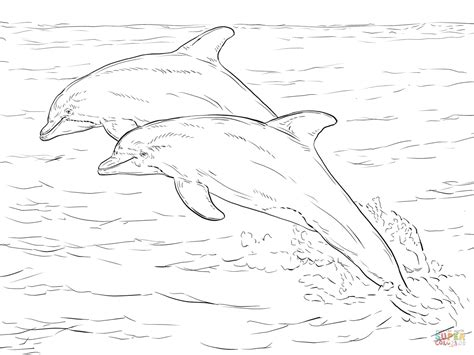coloring page of bottlenose dolphin bottlenose dolphin clipart coloring