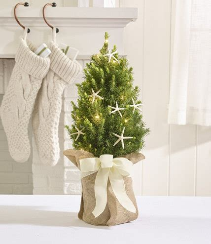large evergreen table top christmas tree coastal evergreen tabletop live christmas tree lighted