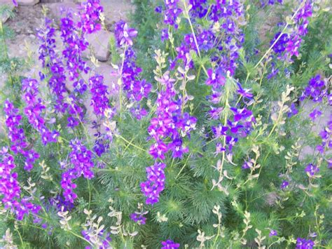 purple flower garden gardening and flowers purple flowers