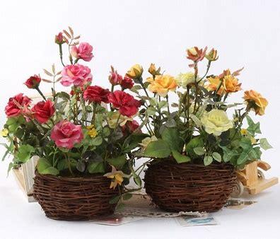 jenis tanaman bunga hias  pot  jenis tanaman