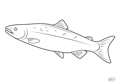 salmon template salmon coloring pages sketch coloring page