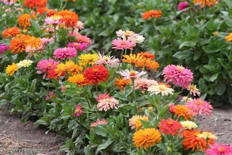 How To Start A Cutting Garden Mnn Mother Nature Network Zinnias Flower Garden