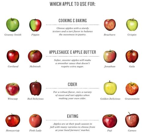 williams sonoma s apple guide best apples for cooking baking good to know pinterest