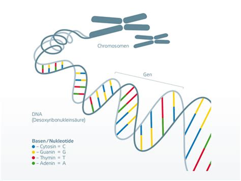 protein threads that form the basis of a clot hereditary information bio logis