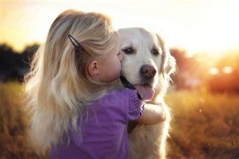 i want a golden retriever yes dogs also best friends i want to show you my golden retriever mali s
