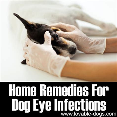 home remedies for dogs lovable dogs home remedies for eye infections lovable dogs