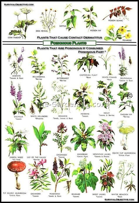 poisonous backyard plants poisonous garden plants uk 9 best garden design ideas