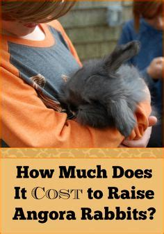 How Much Does It Cost To Lift A House by What Breed Angora Rabbit Is Right For You Angora Rabbit