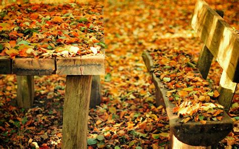 autumn park bench autumn nature park bench leaves hd desktop wallpaper