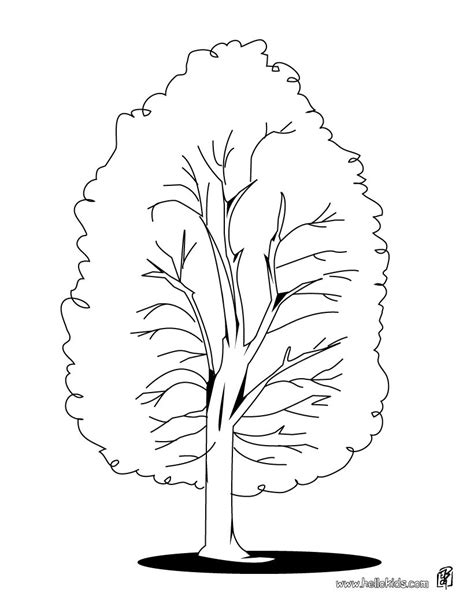 beech tree coloring page tree coloring pages beech tree beech tree coloring page in