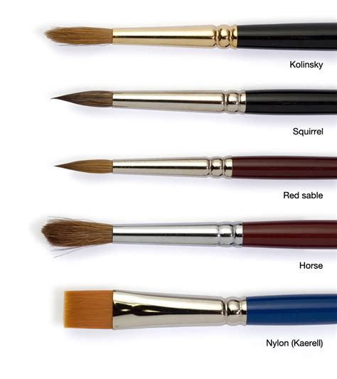 Paint Brush Hair Types by Watercolor Brush Types Watercolor Painting Tips