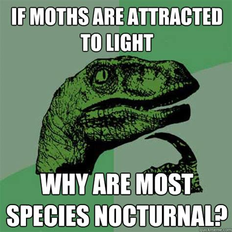 Moth Meme - if moths are attracted to light why are most species