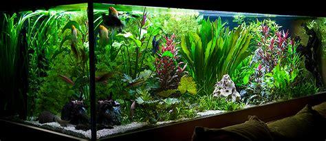 liter suesswasser aquarium xx