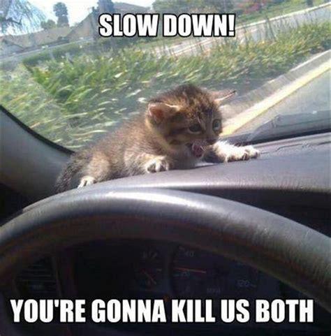 Scared Cat Meme - funny scared cat dump a day