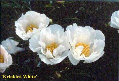 fiore bianco molto profumato le nostre variet 192