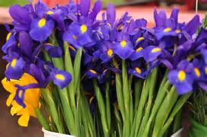 Flowers Clayton Nc - blue dragonfly cut flower farm spring flowers