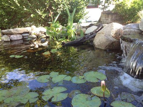 backyard pond maintenance minnesota small backyard pond with a waterfall and bog