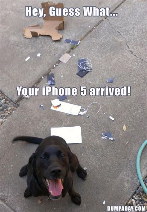 Black Lab Meme - hilarious 8 labrador pups that make epic memes this is so
