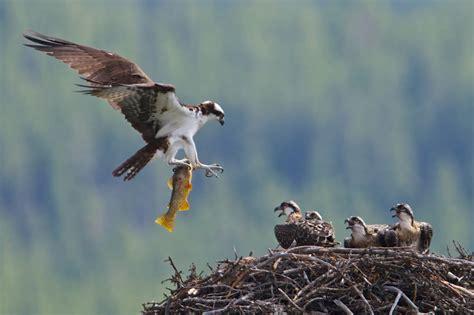 amazing birds  banff national park banff lake