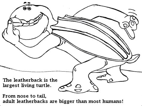 leatherback turtle coloring page canku ota coloring book page ten