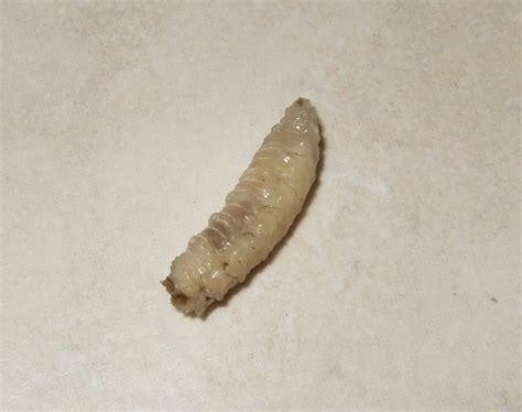 larve in casa aiuto larve in casa foto inside pare cadano da