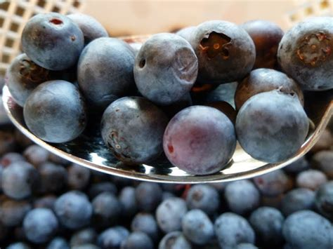 only from scratch 10 recipe ideas for blueberries