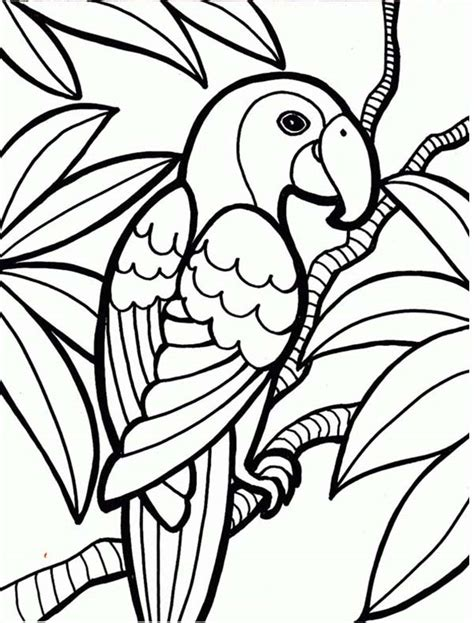 coloring pages of birds in the rainforest rainforest parrot coloring page download print online