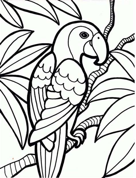 rainforest parrot coloring page  print