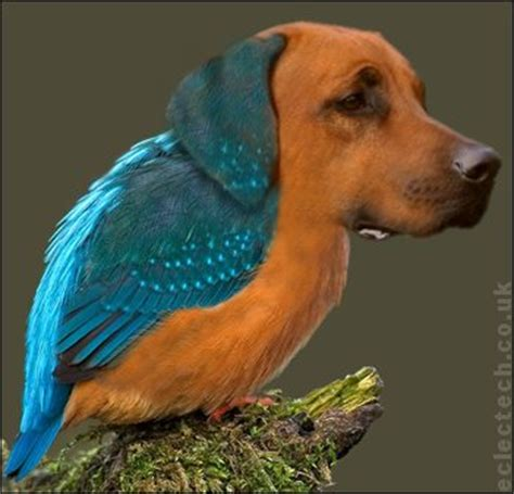 all about puppies ta kingfisher