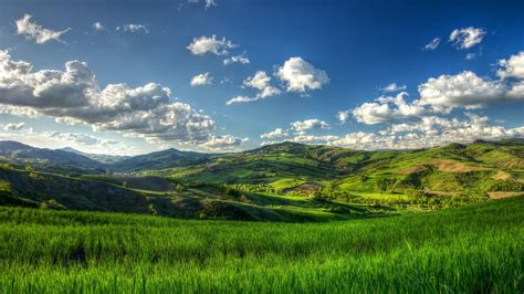 nature landscape trees clouds hill field grass