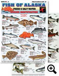 Saltwater Fishing Charts and Saltwater Fish Identification Charts and