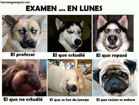 imagenes de animales graciosos para facebook perros graciosos humor para facebook banco de imagenes y