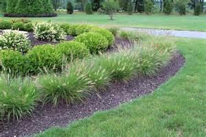 Decorative Grasses Full Sun Dwarf Fountain Hameln Grass
