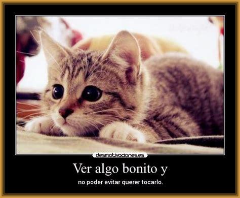 imagenes lindas de amor de gatitos gatos con frases lindas