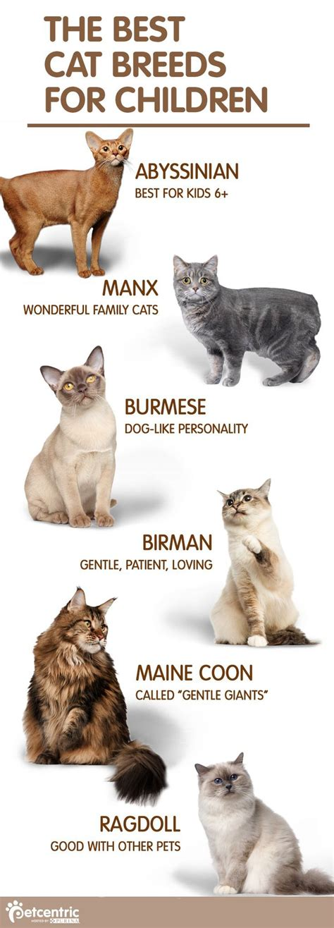 8 Reasons Cats Make Great Companions by 25 Best Ideas About Breeds Of Cats On Kitten