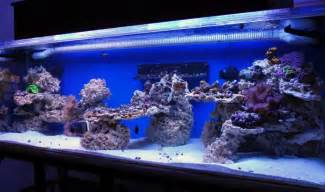 Reef Tank Aquascaping by How To Drill Live Rock Reef Central Community