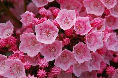 piante in fiore piante in fiore piante da giardino piante in fiore