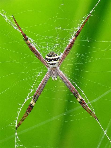 Garden Spider National Geographic 293 Best Scary Bugs And Spiders Images On
