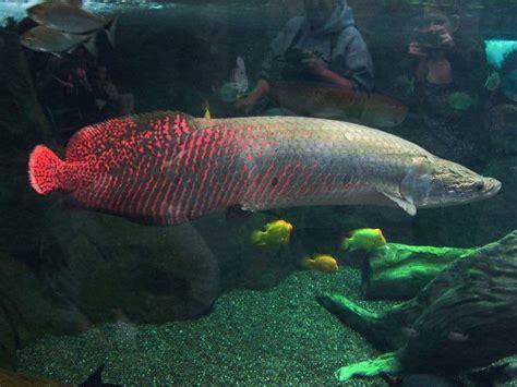 terrifying  deadly animals   amazon river
