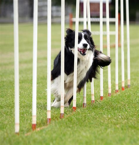 how to agility how to guide agility equipment