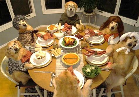 middle tennessee golden retriever golden retriever thanksgiving pictures merry photo