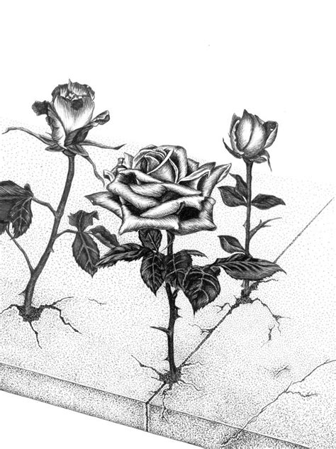 rose that grew from concrete by darkguardiann on deviantart