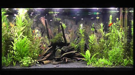 led beleuchtung aquarium led aquarium beleuchtung daytime cluster mit