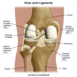 Knee pain fibular collateral ligament bike forums